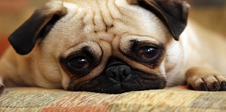 how-to-take-care-of-dog-vomiting-problem