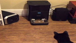 Petnet Smartfeeder review-feed your cat automatically with iPhone