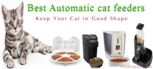 Best Automatic Cat Feeder for Wet and Dry Food 2017