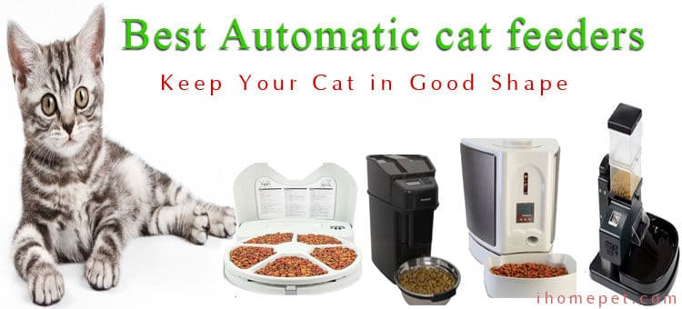 Best Automatic Cat Feeder Reviews – 2016