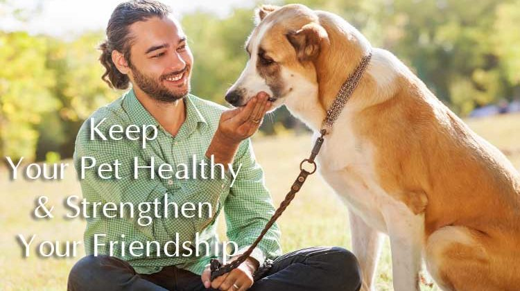 How to take care a dog: keep your pet healthy & strengthen your friendship