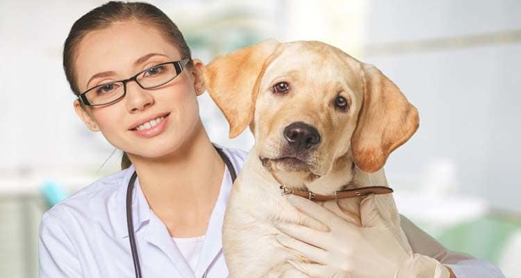 10 Things Veterinary Professionals Want You to Know About Pet Care