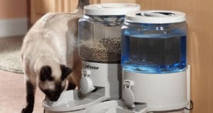 Feed your cat easily with automatic cat food dispenser