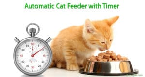 Automatic Cat Feeder with Timer: Best Device for Cat's Eating Lifestyle