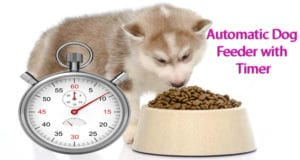 Automatic Dog Feeder with Timer: Feed Your Pet when You are Away from Home