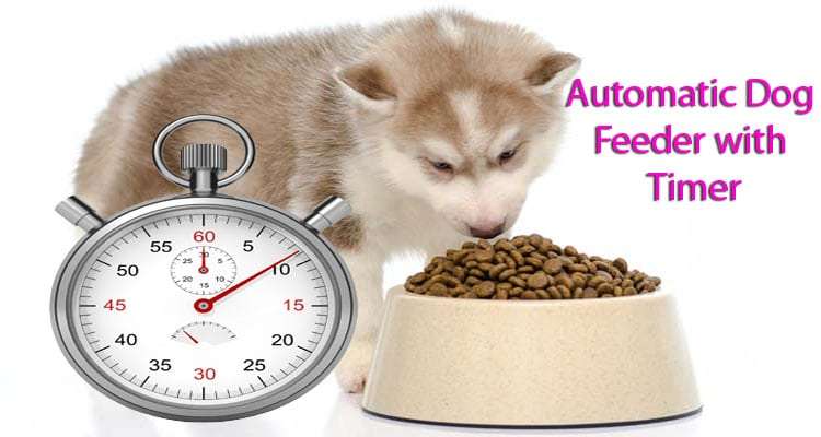 automatic-dog-feeder-with-timer