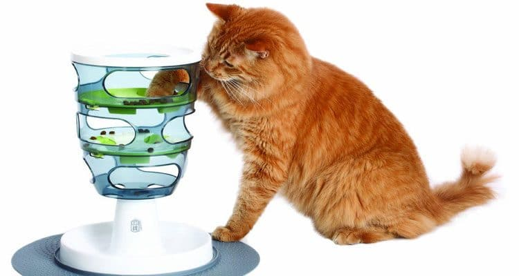 5 Best Cat Food Dispenser