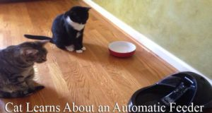 Cat Learns About an Automatic Feeder: Adjusting with the New Feeding Device