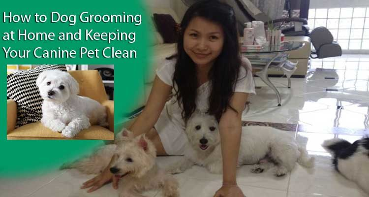 How to Dog Grooming at Home and Keeping Your Canine Pet Clean