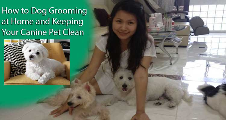 dog-grooming-at-home