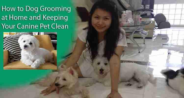 dog-grooming-at-home