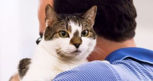 Health Tips for Senior Cats: How to Take Care Old & Mature Feline