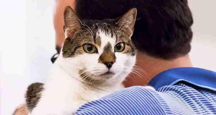health-tips-for-senior-cats