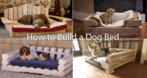 How to Build a Dog Bed to Provide Shelter for Your Pet