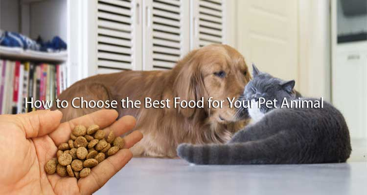 How to Choose the Best Food for Your Pet Animal