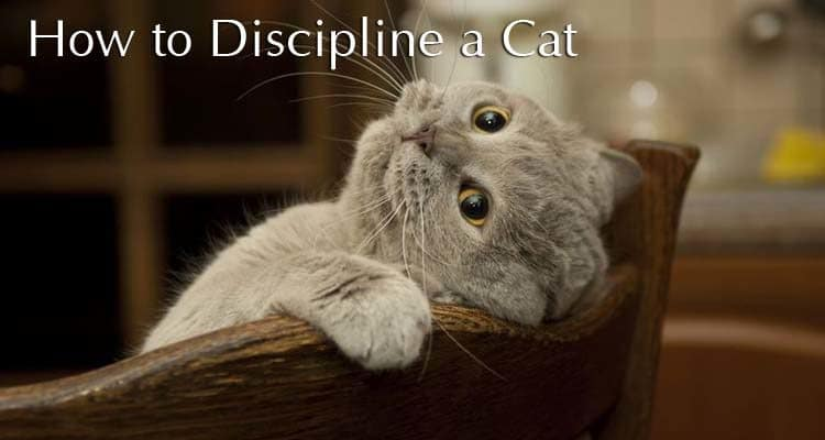 How to Discipline a Cat: Correcting Your Pet's Bad Behavior