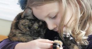 How to Get a Cat to Like You-Help Your Cat like You
