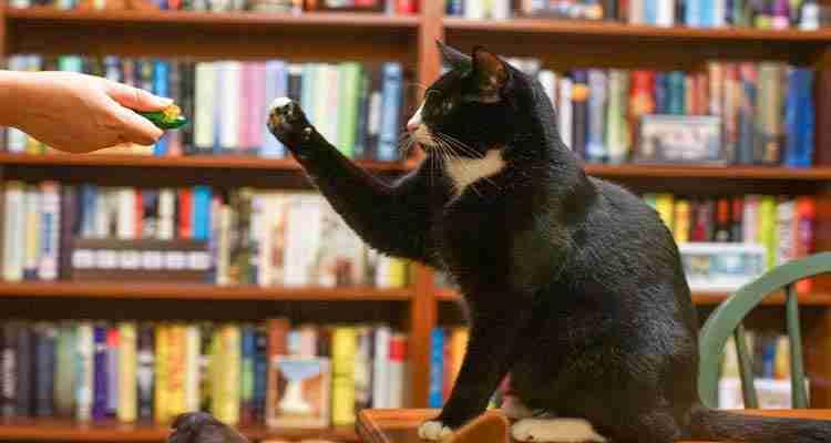 understanding-cat-behavior-for-effective-discipline