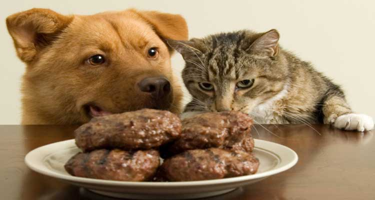 dog-and-cat-looking-at-food