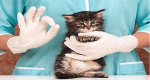Home Remedies for Cat Constipation: Treating Constipation in Natural Way