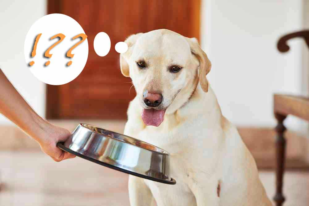 What is Dog Food Low In Sodium?