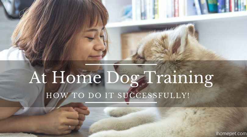 At Home Dog Training - How to Do It Successfully!