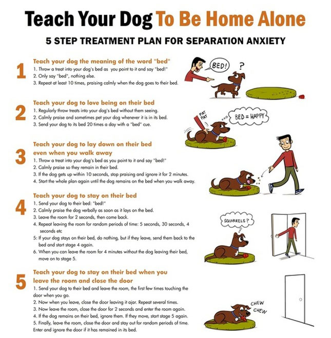 Leaving Your Dog Alone at Home