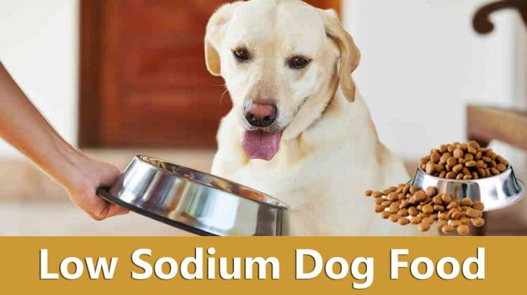 Everything You Need to Know About Low Sodium Dog Food