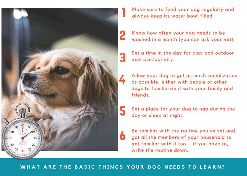 Set a Daily Routine for Your Dog