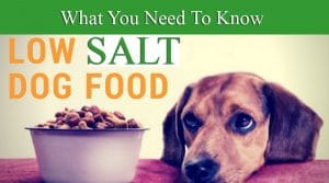 Low Salt Dog Food: What You Need to Know