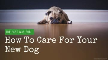 [Infographic] How To Care For Your New Dog: The Easy Way