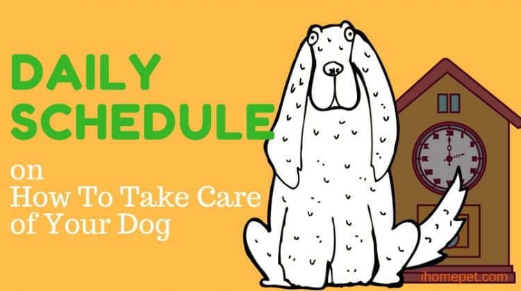 [Infographic] Daily Schedule on How to Take Care Of Your Dog