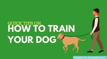 [Infographic] Quick Tips on How to Train Your Dog