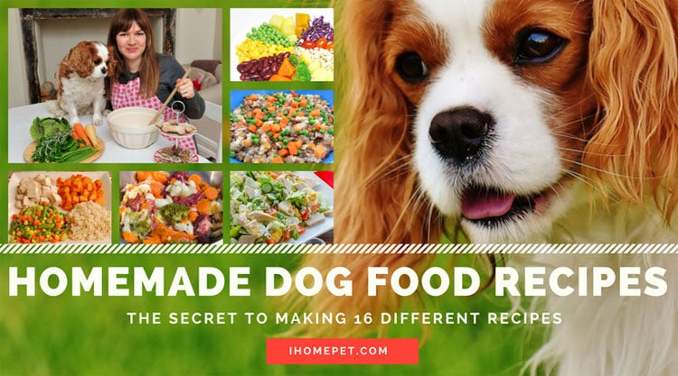 Homemade dog food recipes the secret to making 16 different recipes forumfinder Choice Image