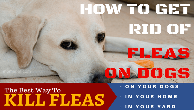 How to get rid of flea on dogs