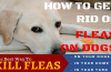 How to Get Rid of Fleas on Dogs – What's the Best Way