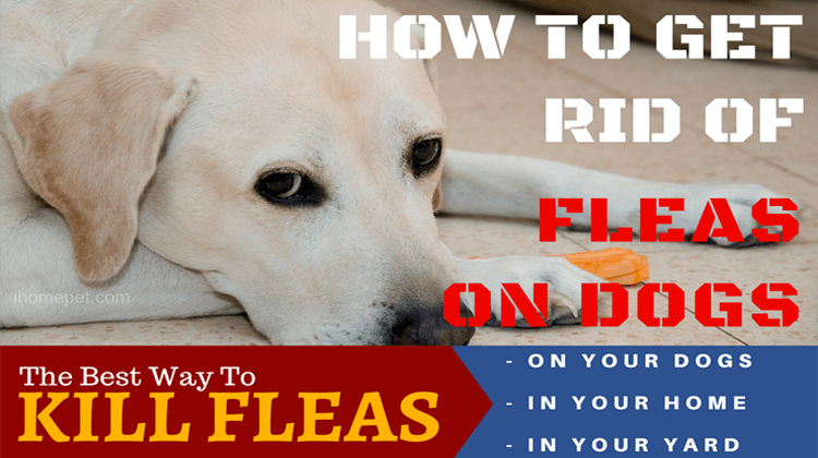 How to Get Rid of Fleas on Dogs | What's the Best Way