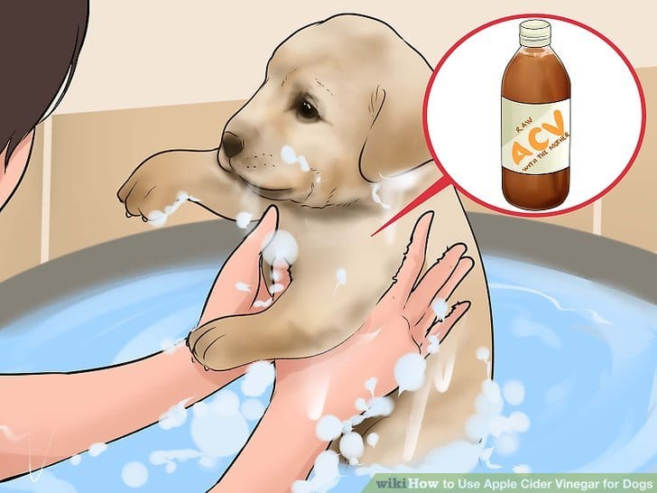 Trying Natural Flea Treatments
