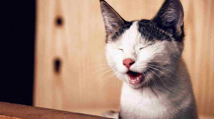 Your Cat May Be in Pain: Know the Signs, Causes and Best Treatment