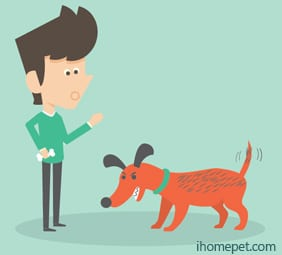 Assertive - Overly confident Understand Dog Body Language
