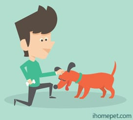 Assertive - Overly confident-Understand Dog Body Language