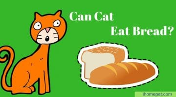What Do You Know About Your Cat's Diet: Can Cats Eat Bread?