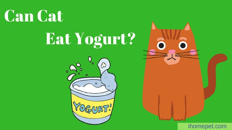 Can Cats Eat Yogurt? Demystifying the myth