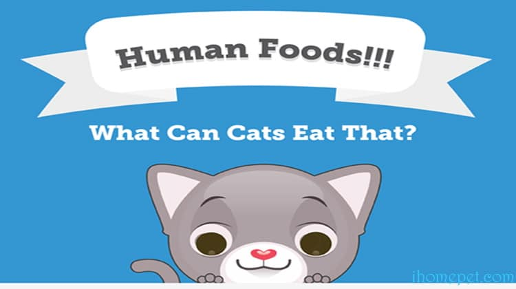 [Infographic] Human Foods – What Can Cats Eat Besides Cat Food