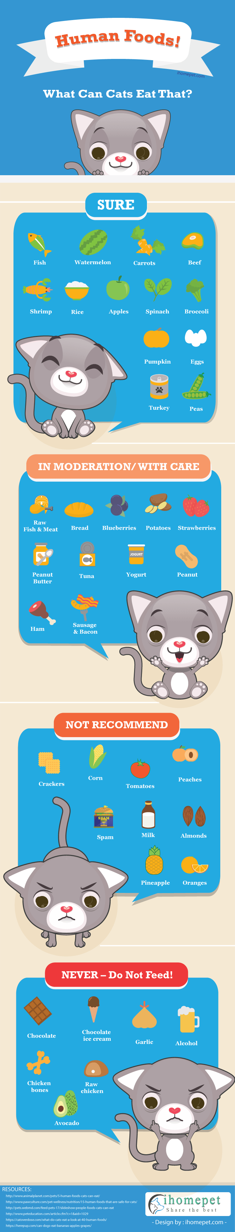 What Can Cats Eat Besides Cat Food