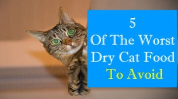 5 Of the Worst Dry Cat Food In 2017