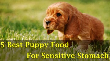 5 Of The Best Puppy Food For Sensitive Stomach