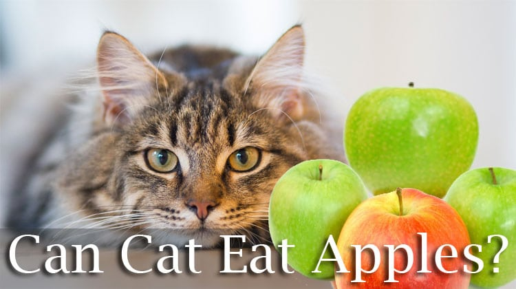The Truth About Cats And Apples: Can Cats Eat Apples?