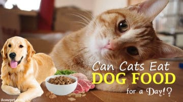 What Do You Think? Can Cats Eat Dog Food for a Day !?