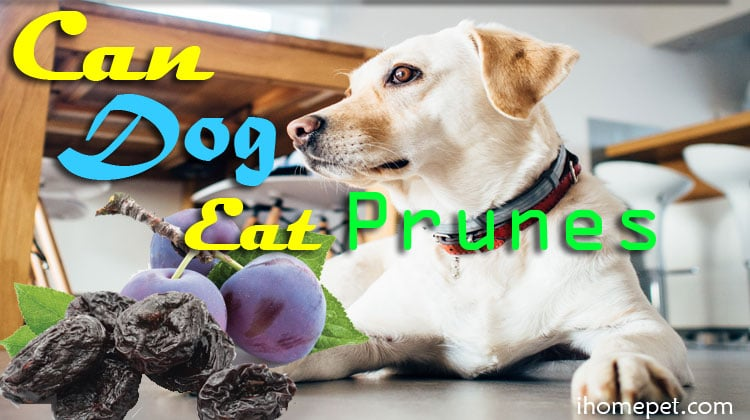 Can Dogs Eat Prunes to Solve Constipation? Be in The Know